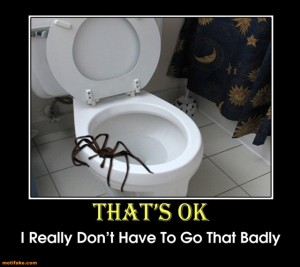 spider toilet
