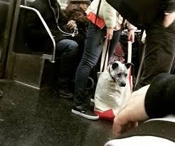dog in bag 2