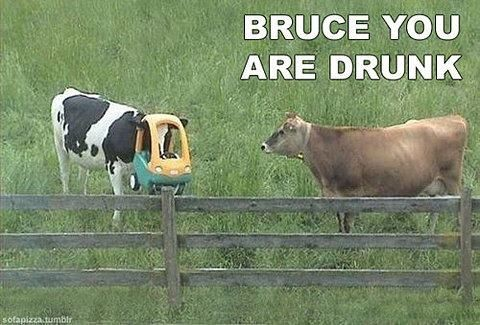 bruce-the-cow