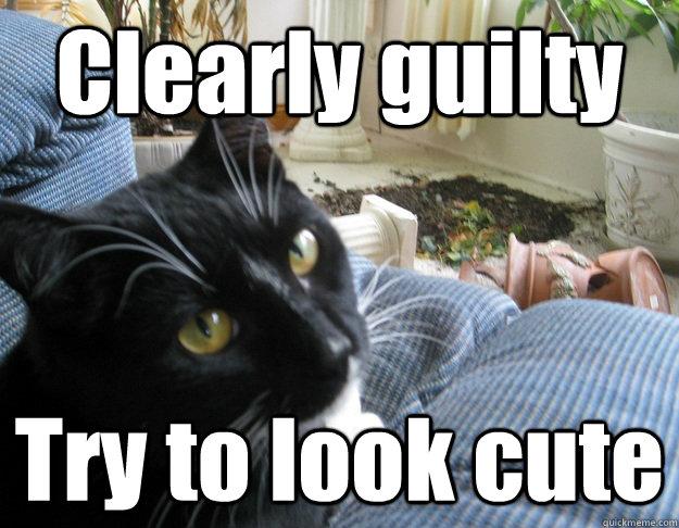 guilty meme