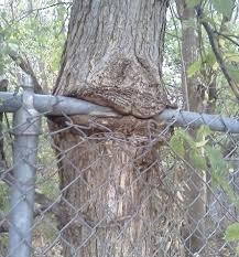 tree eating