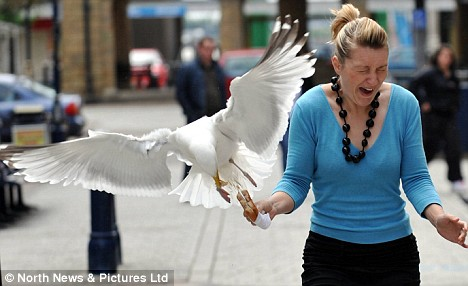 woman-attacked-by-hungry-seagull